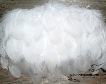 """White Feathers Real Feathers Natural Feathers Cruelty Free Feathers Real Bird Feathers White Rooster Feathers For Crafts Qty 30 1.5-2.5"""""""