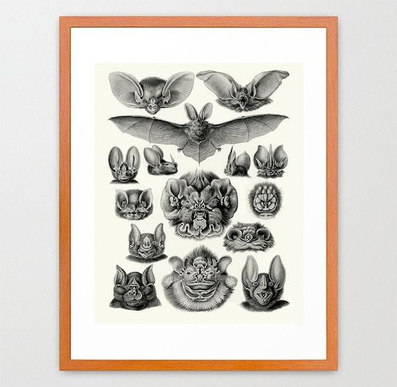 Bats - Bat Poster - Bat Illustration- Natural History Illustration - Ernst Haeckel - Cave - Art Print
