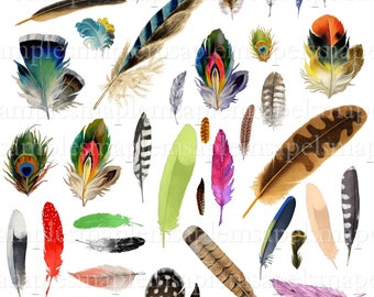 Digital Collage Sheet feathers birds JPEG-Instant Download bird feathers clipart Digital Scrapbook Paper bird feather card making