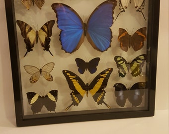 Black framed butterflies
