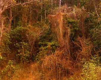 Dense Jungle - Photographic Print - Forest Tropical Thailand Island Travel Rainforest Photograph Asia Koh Chang Landscape Trees