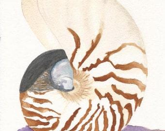 Watercolor Seashell, Seashell Art, Seashell Print, Sea Shell Painting, Coastal Wall Art, Bathroom Decor, Beach Art Print, Nautical Wall Art