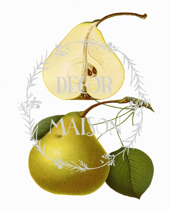 French Pears Botanical Vintage Print Set Giclee Canvas Art