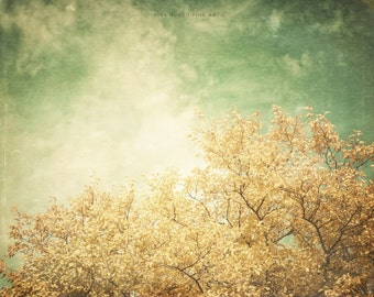 Bright Yellow Tree Print or Canvas Art, Gold Green Nature Print, Yellow Tree, Sunlight, Vintage Tones, Gold, Green, Autumn.