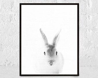 Gray Rabbit Print Bunny Printable Art Animal Print Nursery Print Rabbit Poster Print Download black and white baby animal print