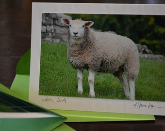 Sheep - blank notecards with original photography