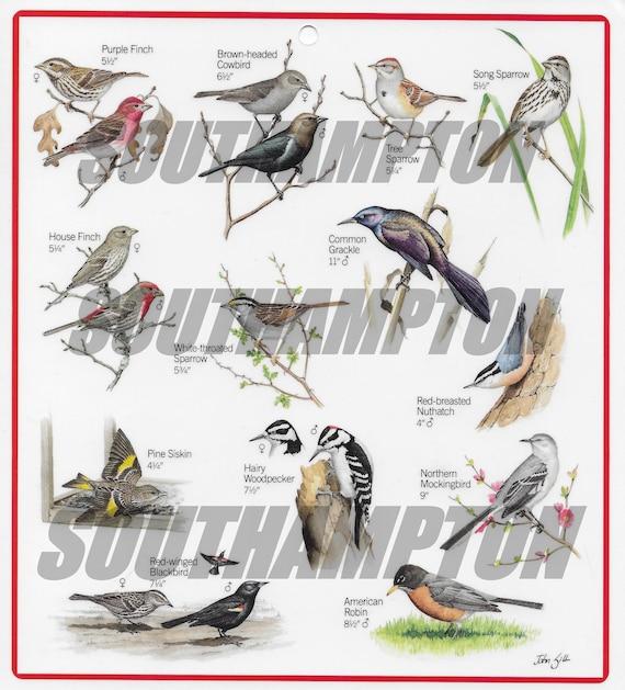 Bird Identifier Digital Download