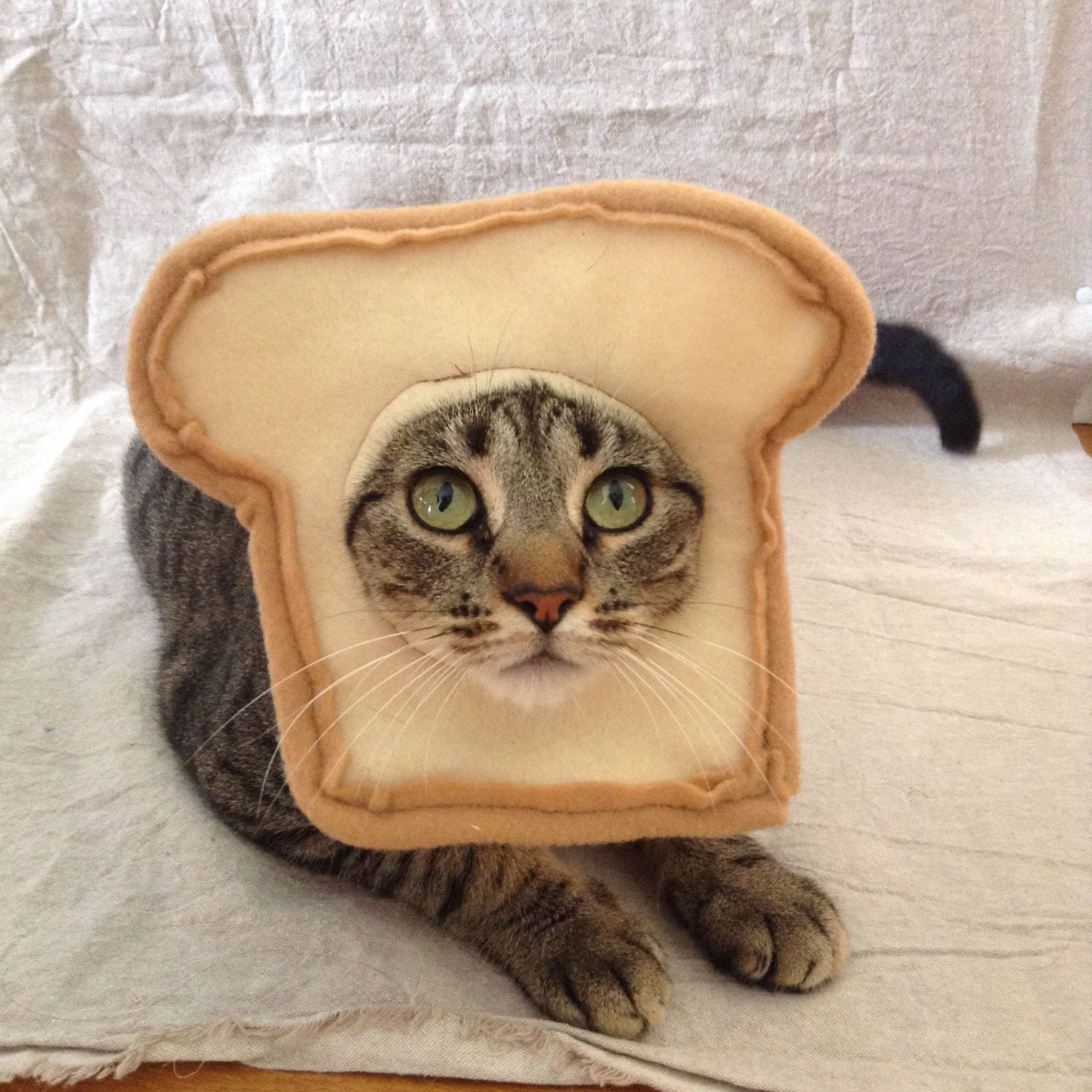 Bread cat costume for cats zoom reviewsmspy