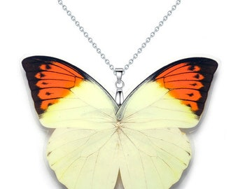 Real Butterfly Wing Pendant / Necklace (WHOLE Hebomoia Glaucippe aka The OrangeTip Butterfly - W122)