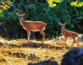 Deer & Fawn. Animal Photography, Deer Photography, Deer Baby Shower, Nature Wall Art, Forest Decor, Sunlight, Deer Wall Art, Deer Wall decor