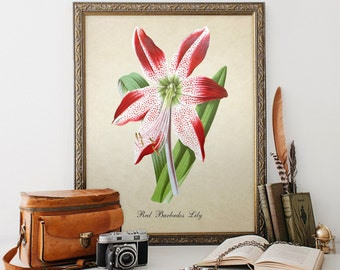 Botanical Print, Wall Art, Vintage Red Barbados Lily Print, Home Decor, Natural History Art, Colorful Lily Decorative Reproduction FL062