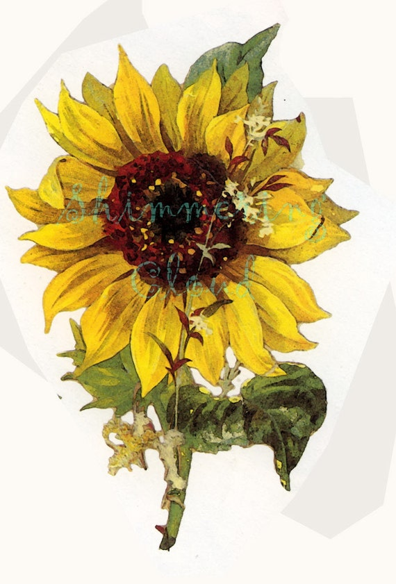 Astounding image throughout printable pictures of sunflowers