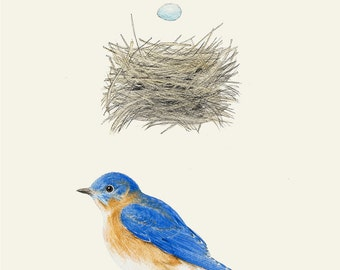 Eastern Bluebird Nest and Egg Group 5x7 print