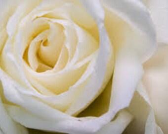 White Rose Seeds, Rose Bush, Heirloom Plant, Perennial Flowering Shrub