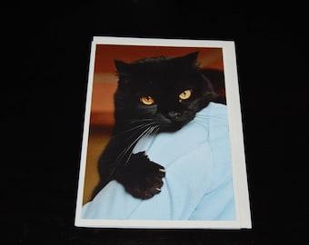 Black Domestic Shorthair Feline Photo Notecard