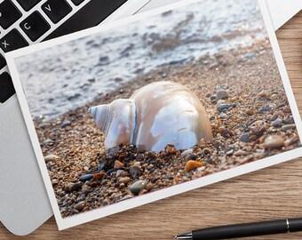 Seashell Notecard, Seashell Photo Card, Shell Card, Blank Card, Beach Photo Card, Thinking of You Card, Photo Greeting Card, Fine Art Photo