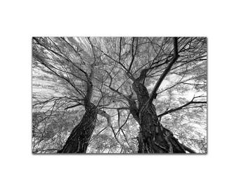 Weeping Willow Tree, Black and White, Art Print Zen Atmosphere Serene Calm Peaceful Wall Pastoral Photo Wall Art