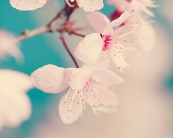 Flower photography, white spring blossoms, nature, nursery wall art, dreamy, blue, whimsical fine art print, feminine wall decor, home decor