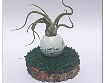 Fathers Day Air Plant Golf Ball planter perfect gift for Dad