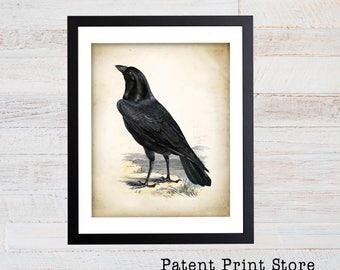 Raven Art Print. Raven Poster. Vintage Raven Illustration. Raven Illustration. Raven Bird. Bird Art. Black Raven Bird. Oddities Art. 103