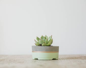 Mother's Day Gift for Her, Small Concrete Planter, Seaside & Gold