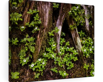 Roots and Wild Flowers Canvas Gallery Wraps