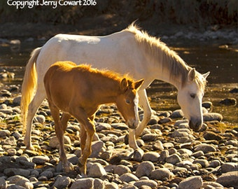 Horse Photography, Colt And Mare Photograph, Salt River Arizona Wild Horses Fine Art Photography Print, Equestrian Fine Art For The Stable