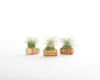 3 Wine Cork Air Plant Magnets