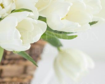 Flower stock photography | White tulips stock photo - Tulips stock photo - Spring stock photo - Neutral stock photo - Flowers in basket
