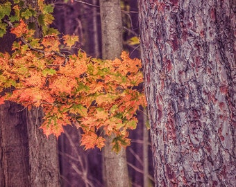 Fall Foliage Print, Fall Leaves Print, Fall Print, Fall Photography, Fall Picture, Fall Trees Print, Fall Scenic Print, Autumn, Fall Photo