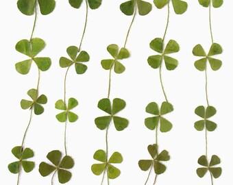 Pressed leaves, clover, trefoil 20pcs for floral art, craft, card making, scrapbooking