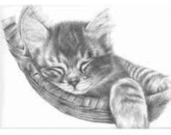 Custom Cat Portrait Example in Pencil - Animal Lover's Gifts - Cat Drawing - Pencil