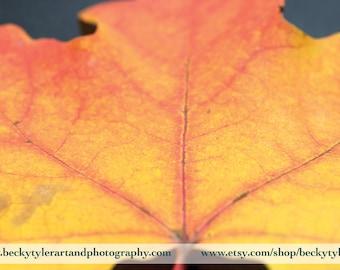 Autumn Leaf, Macro Photography, Fine Art Photo Print