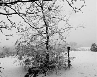 Snow Covered Trees  / Snow Covered Fields / Birdhouse / Trees / Field / Black and White 8x10 / Free US Shipping / MVMayoPhotography