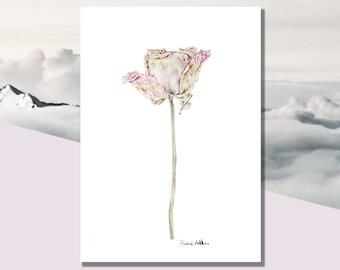 Wilted Rose | A4, 8x10 Print - Giclee Botanical Wall Art