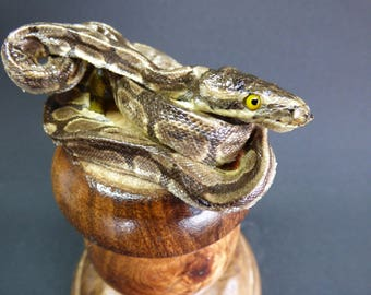 TAXIDERMY Taxidermy Small Python Snake (no:6) On Hardwood Pedestal Mount. Height 17cm. Reptile.