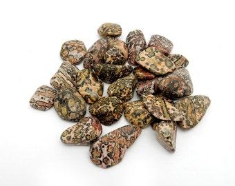Tumbled Stone - Jasper - Tumbled Leopard Skin Jasper By 1 and 5 Pieces - (TS-117-05)