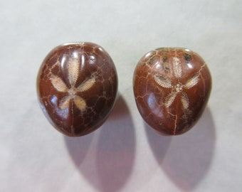 New color Pair Fossil Sand Dollar Sea Urchin Cabochons 18mm x 16mm Echinoid Mexico Jewelry Supply 18T88 C