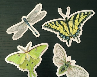 Insects Dragonfly, Cicada, Butterfly, and Luna Moth Vinyl Sticker Pack