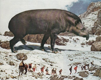 Print - This is Tapir Country Collage
