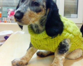 Dog sweater. dog clothes.Clothing for dog.Dog coats.Dog jumper