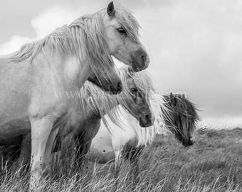 Wild Ponies Fine-Art Greeting Card, Horse Photo Card, Pony Photography, Horse Print, Wild Horse Photography, Pony Print, Black and White