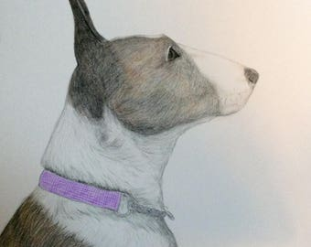 Colored Pencil drawing of a dog