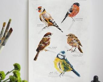 Garden Bird Print, Birds Print, Illustration Bird Print, Bird Art Print, Nature Print, Bird Print, Wall Print, Wildlife, Wildlife Art Print