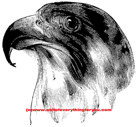falcon head bird printable art print clipart png download digital image graphics digital stamp animal nature black and white artwork