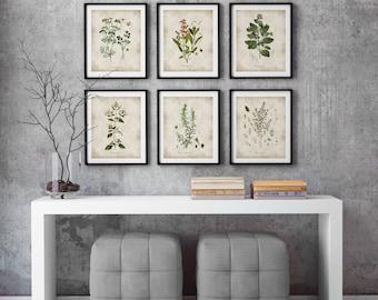 Herbs print, Kitchen Wall Art, Botanical poster, Herb Poster, herbs and spices, kitchen herbs art, Kitchen decor, vintage illustration