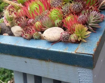 Handmade Butterfly Roosting Box with Sempervivum greenroof