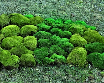 Preserved Mood Moss-NEW softer assorted greens-Larger pieces-Frog Moss-NO water needed-Now by the PIECE