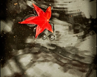 Red Leaf Brown Photograph--Fall's Red--Fine Art Photograph