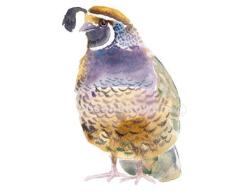 Quail - Size 8x10in - Animal  Painting - Watercolor  Painting - Nursery Art Print